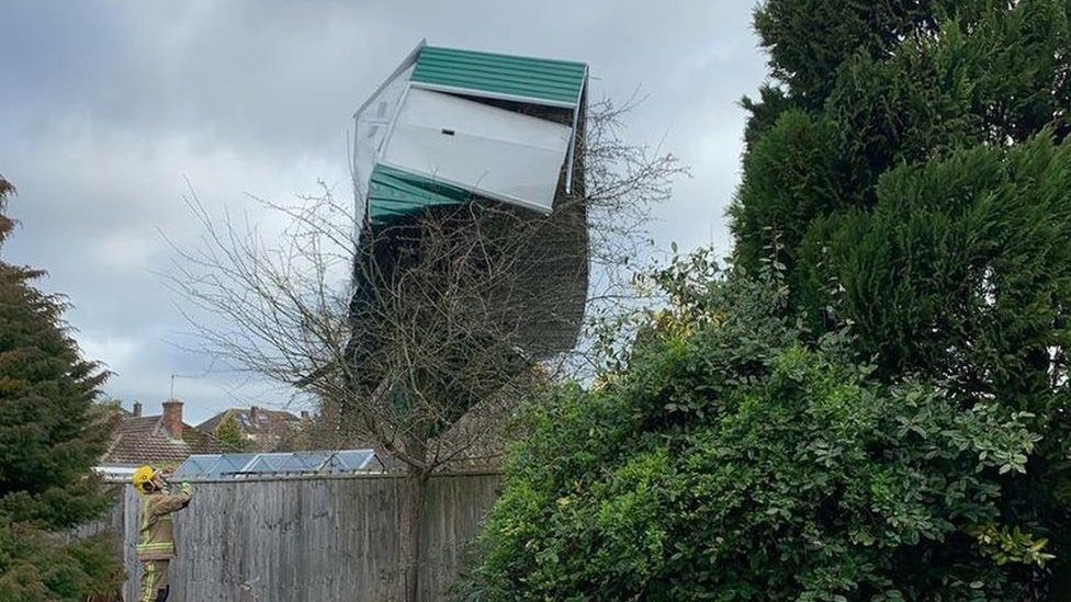 Shed in tree