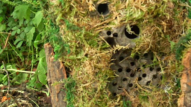 A anti-poaching camera disguised as a part of a tree