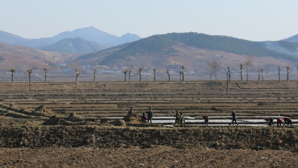 People work in bare fields in North Korea