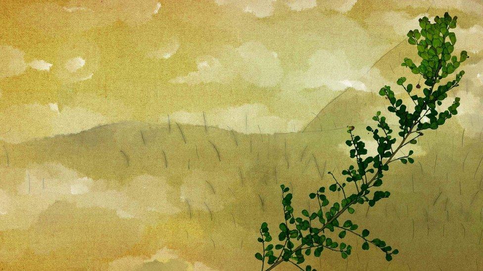 El arbusto neblina Phyllanthus