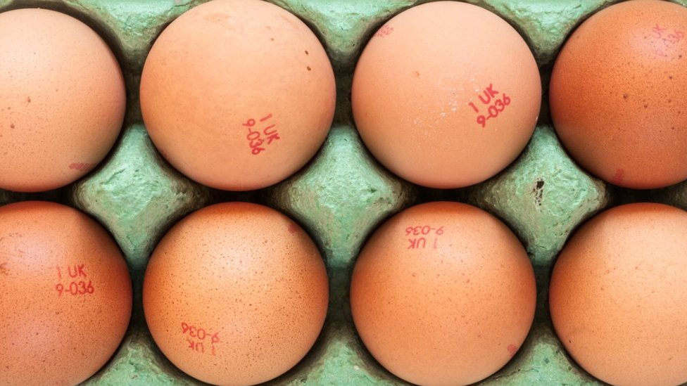 Stock image of eight eggs in a carton
