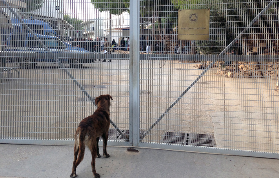 Dog outside Lampedusa reception centre