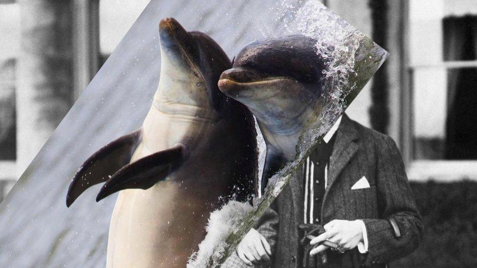 Composición de imágenes de delfines sobre humanos