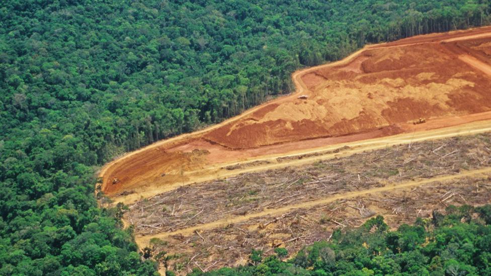 Desforestación en Brasil