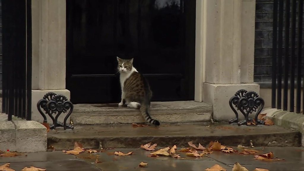 Downing Street's Larry the Cat gets a helping hand from police