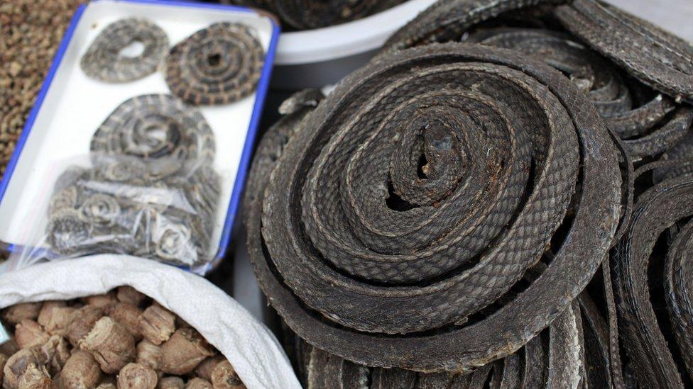 Serpientes secas
