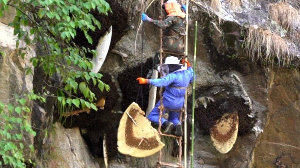 Meet Nepal's daredevil honey hunters
