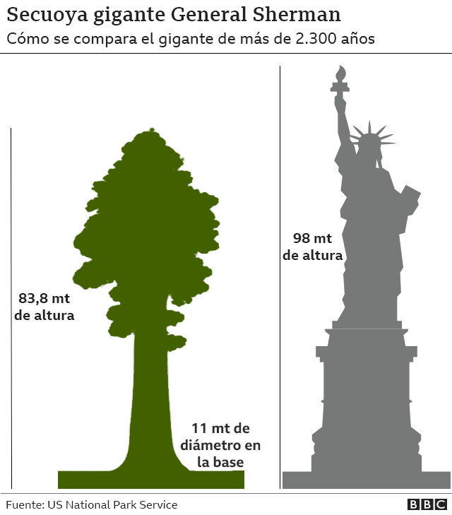 Gráfico que compara la altura de General Sherman con la de la Estatua de la Libertad