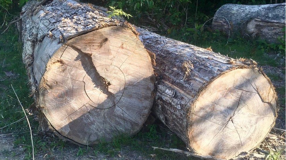Árboles cortados en el suelo de la selva amazónica.