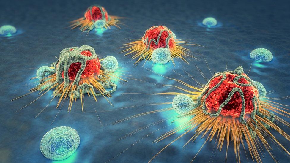 Células cancerosas siendo atacadas por linfocitos.