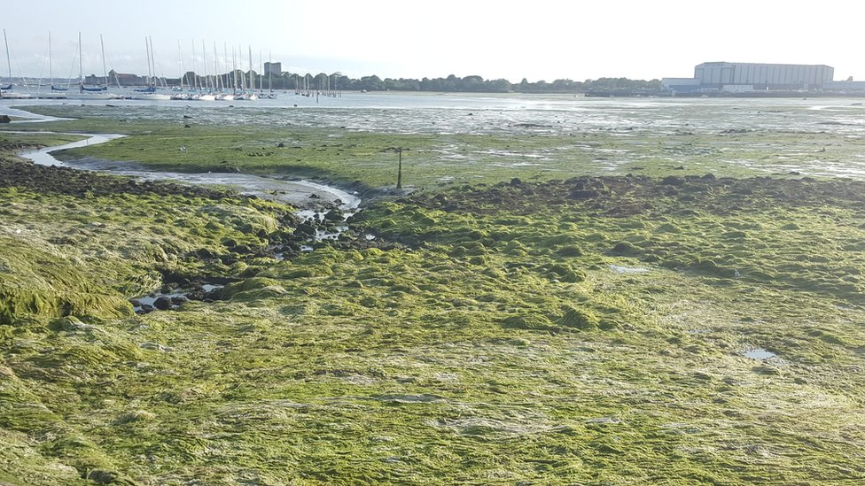 algae near Portchester