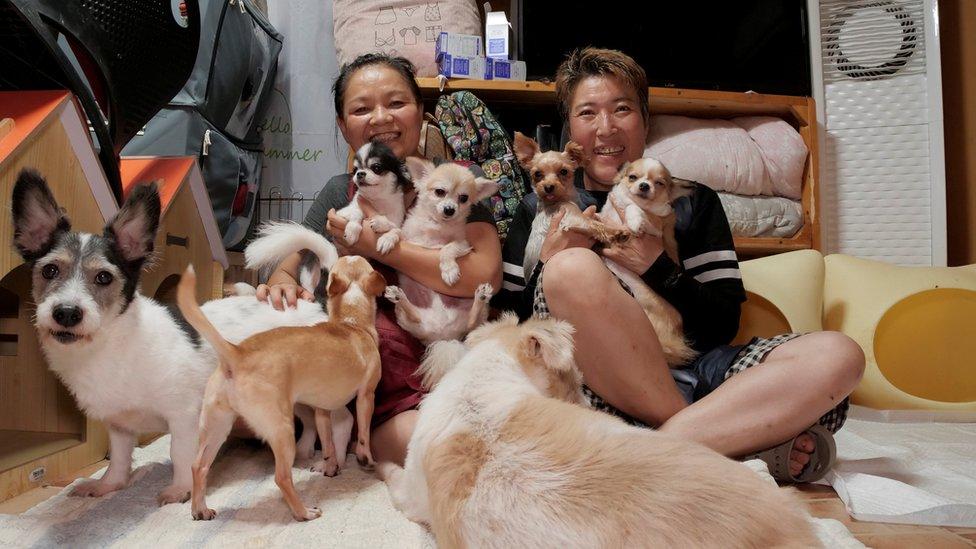 psci i Korejci