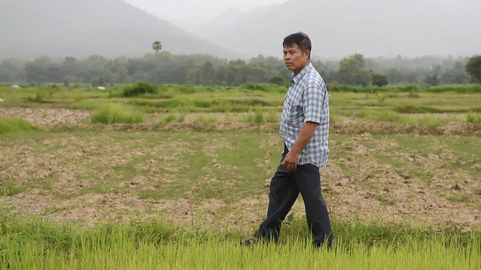 江科萊在自家附近的稻田裏