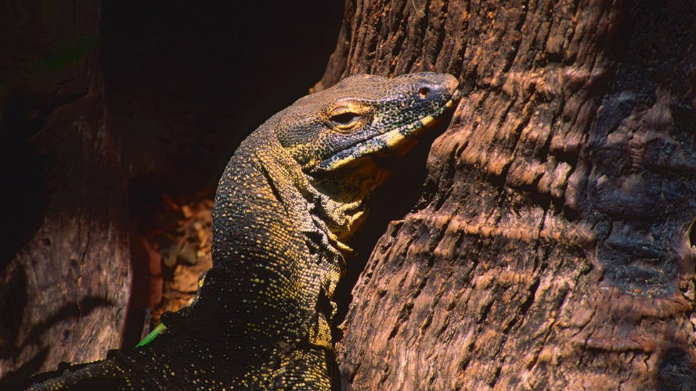 Una iguana en un árbol