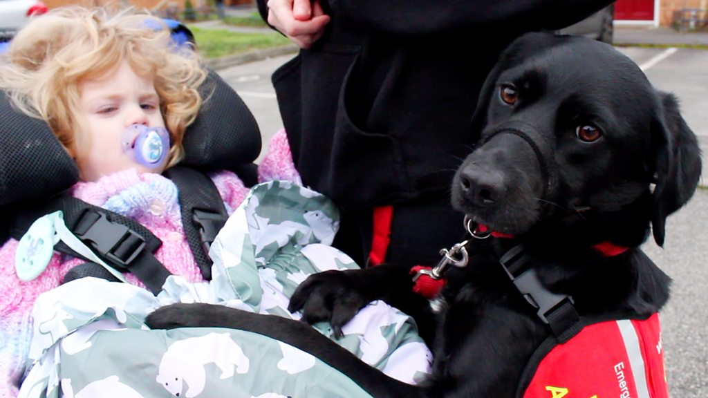 Mum trains family dog to aid disabled daughter