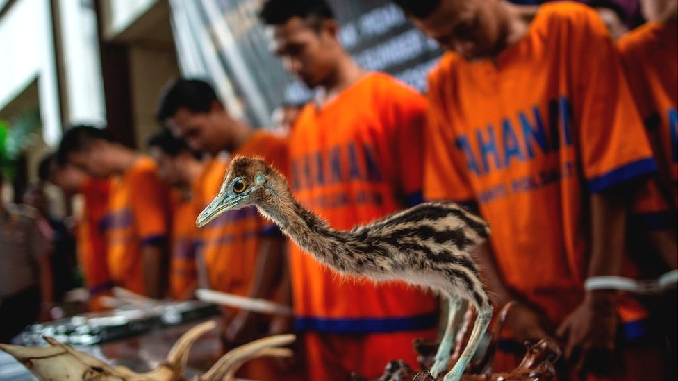 Stuffed bird seized in Indonesia
