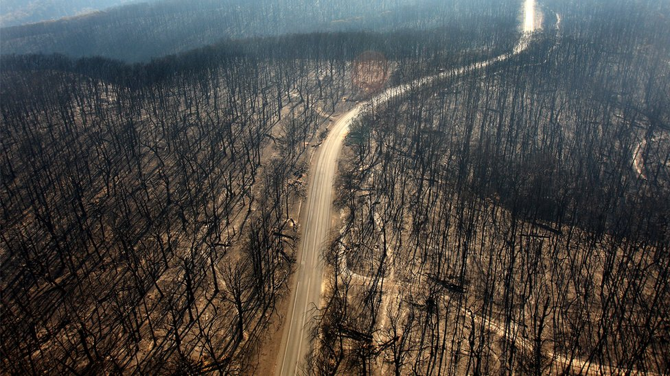 Vista aérea de árboles quemados.