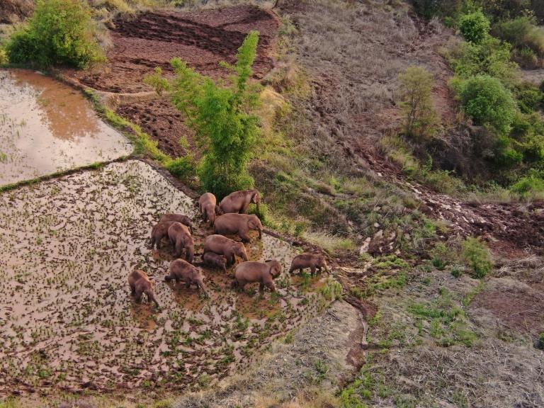 Imagen aérea de los elefantes.