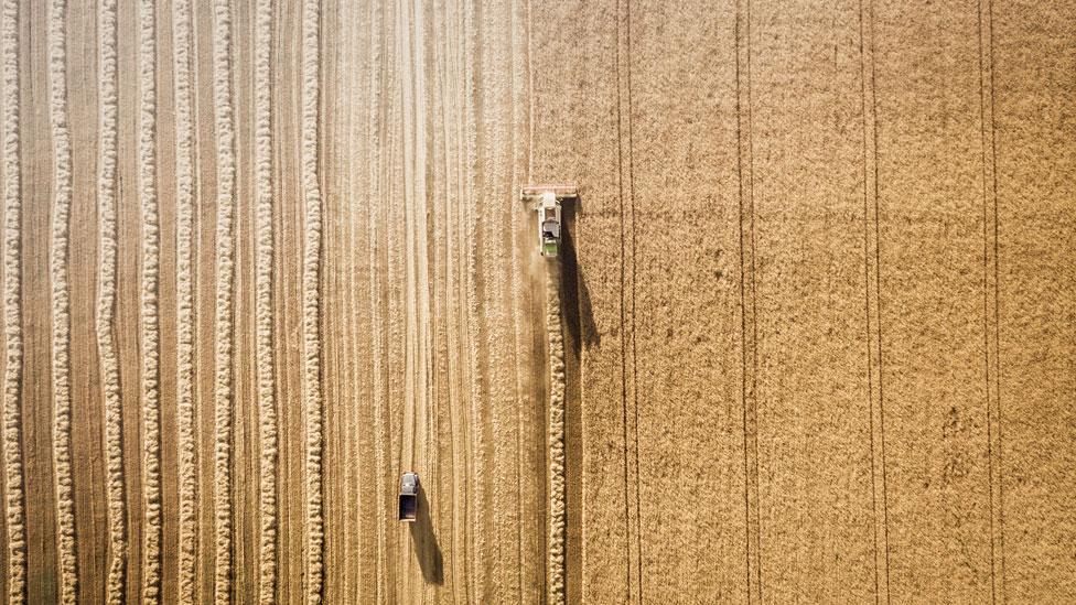 Cosechadora en un campo de trigo