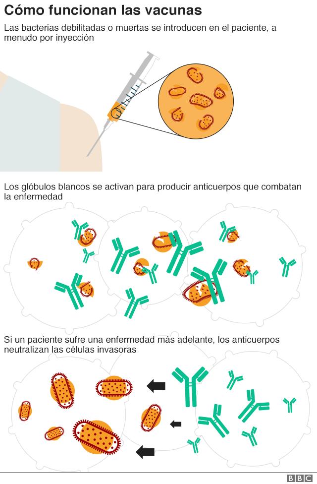 Cómo funcionan las vacunas