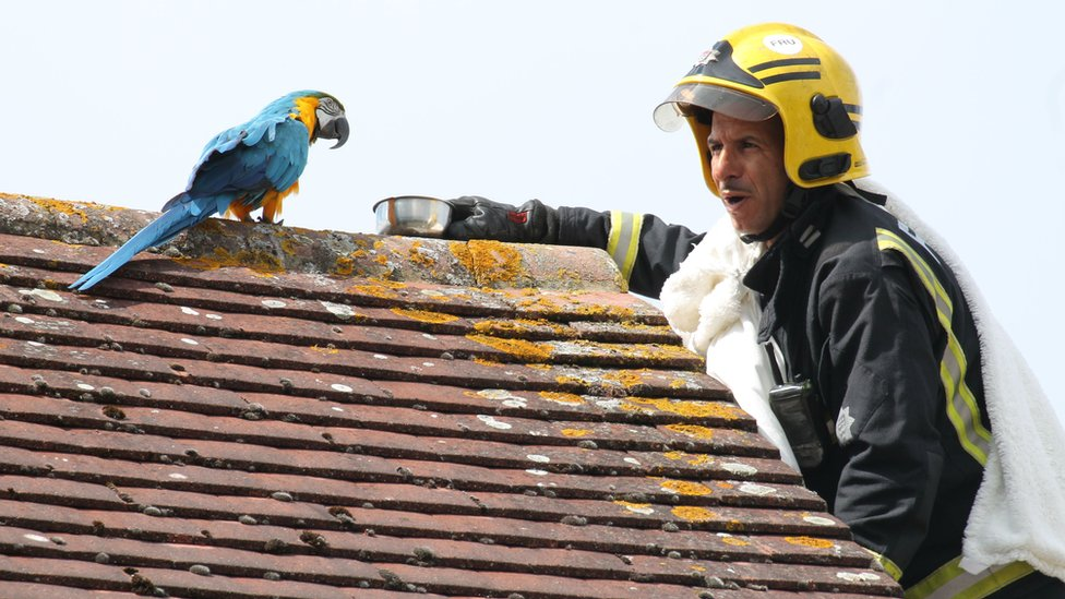 Crew manager Atinc Horoz and parrot Jessie on the roof