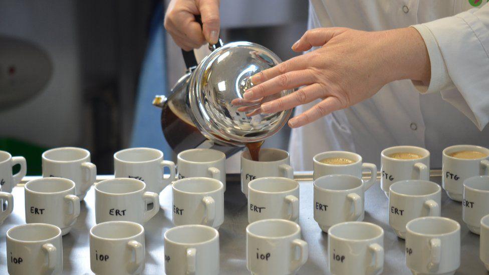 Una persona sirve café en pocillos para un panel de degustadores