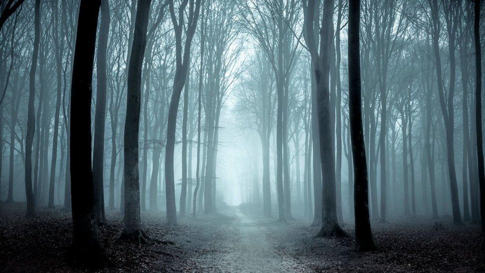 Gloomy woods
