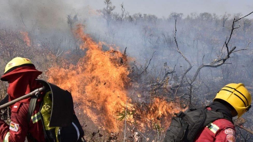 تزايد فقدان الأشجار في بوليفيا بشكل كبير عام 2019 بسبب النيران التي خرجت عن السيطرة