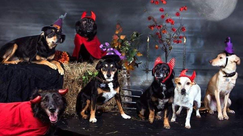 Udomljeni psi obučeni u kostime za noć veštica