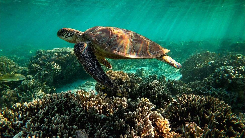 Почему Австралия отказывается от защиты Большого Барьерного рифа?