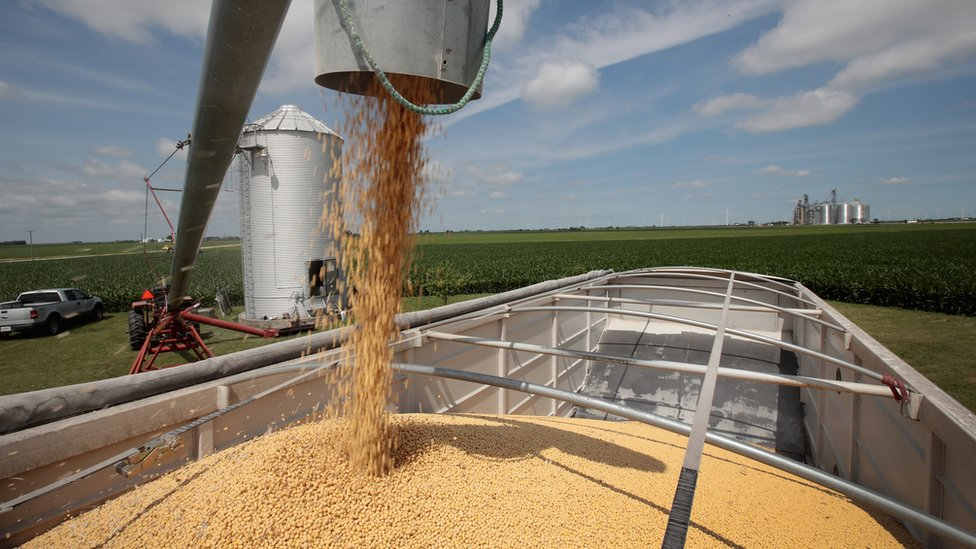 Machinery on a US farm spits out soy beans into the back of a truck.