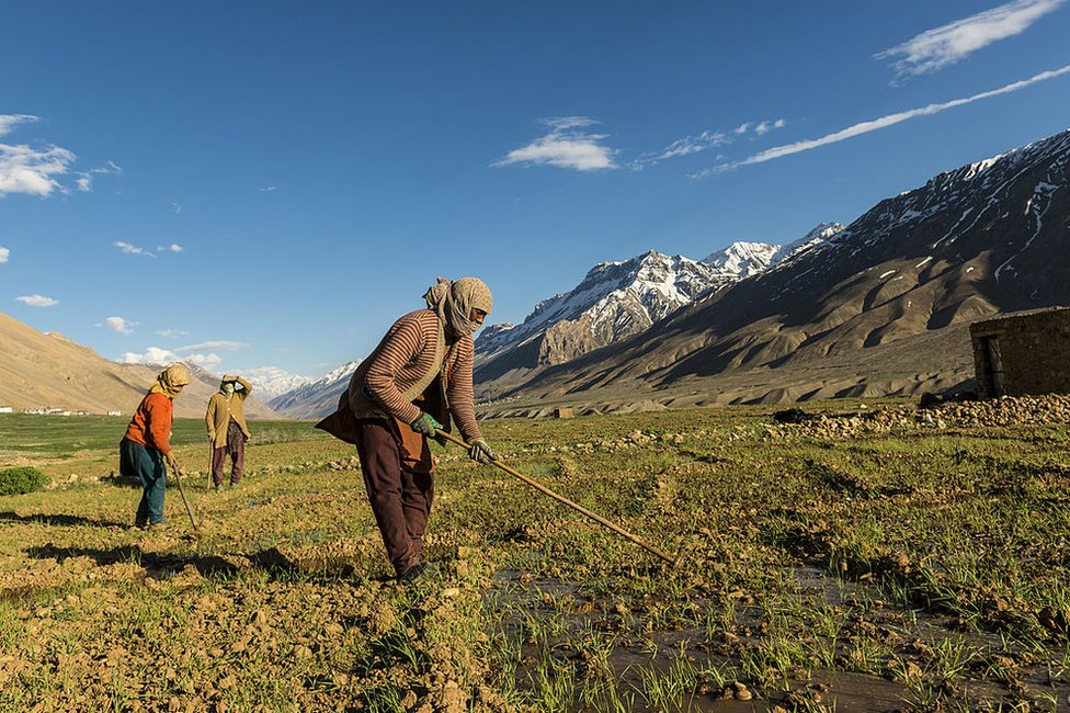 Four local women irrigating fields in the Himalayan district of Kinnaur.