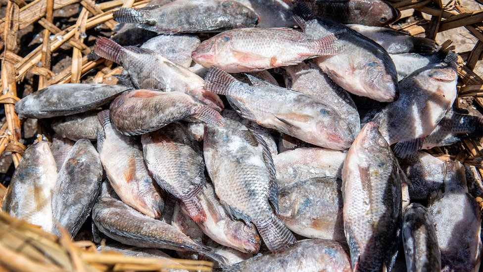 Frozen Chinese farmed fish
