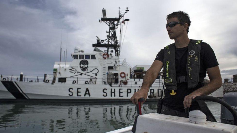 Un conservacionista de Sea Shepherd patrulla en una lancha, con la embarcación Farley Mowat en el fondo