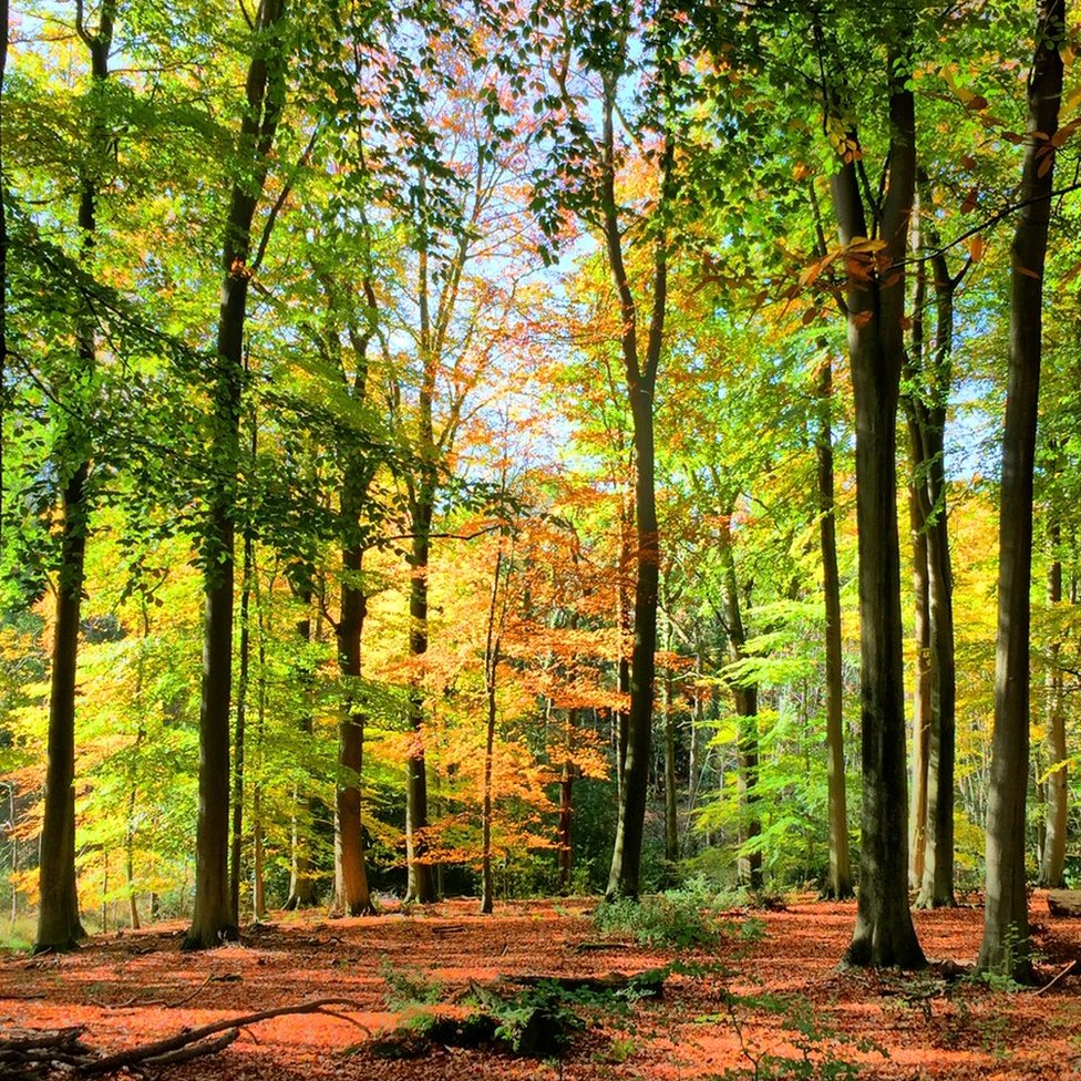 Bagley Wood which is between Oxford and Abingdon in Oxfordshire