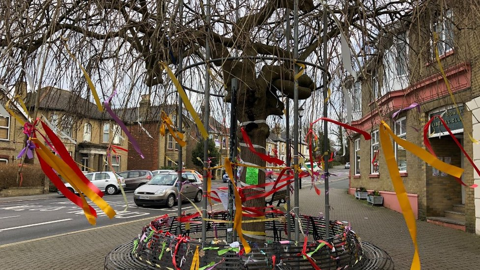Chris Packham campaign tree could be saved by metal frame in East Cowes