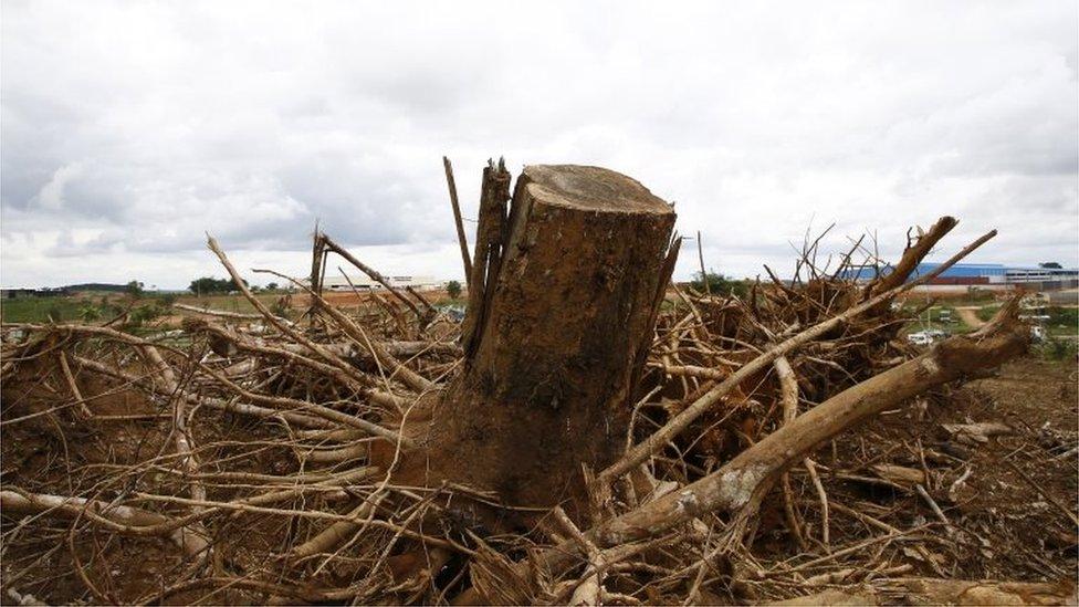 Ilustrasi deforestasi