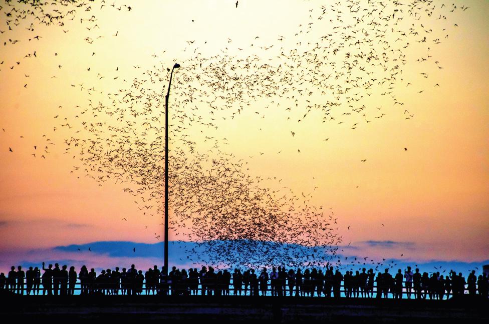 Personas en el puente de la Avenida del Congreso viendo una nube de murciélagos volando