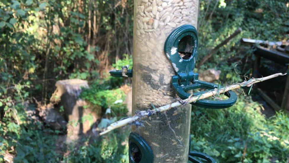 Wild birds die in glue traps at Horsham nature reserve