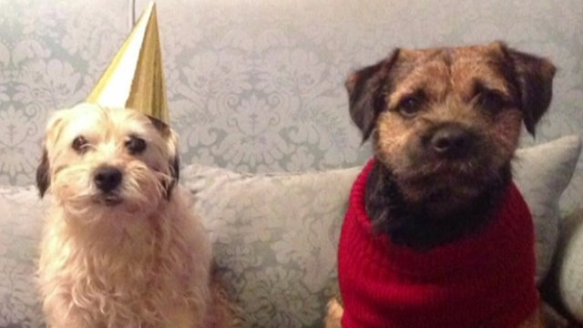 Dogs: William and Buster