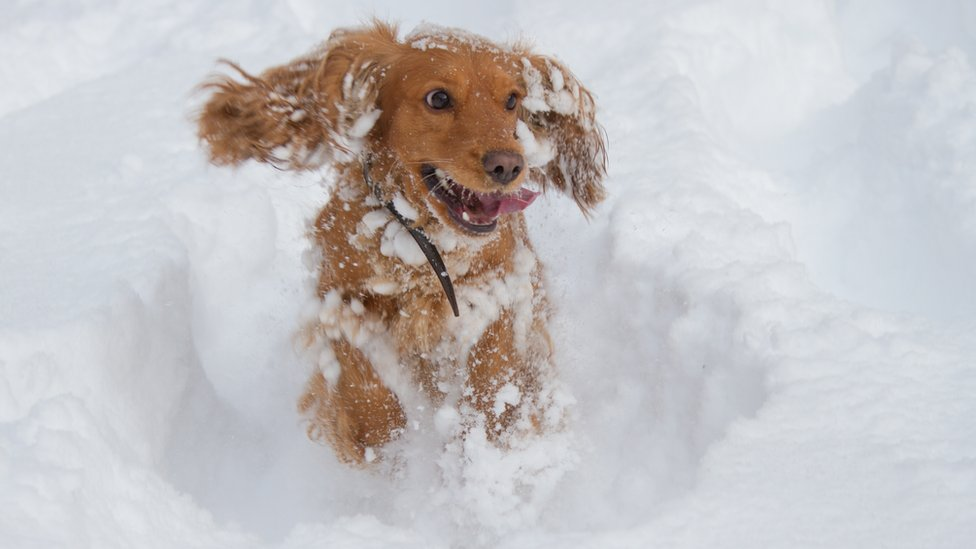 A dog playing in snow