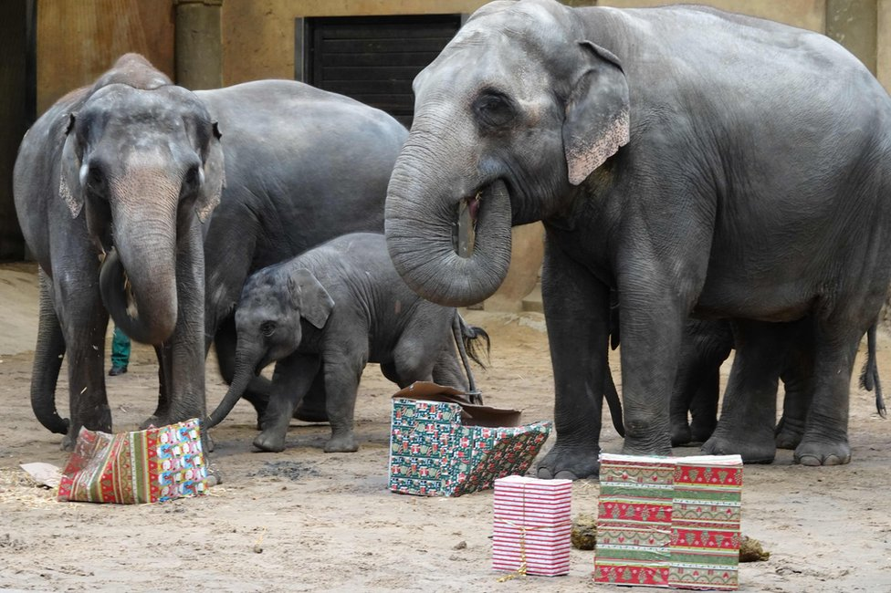 Elephants with boxes of food