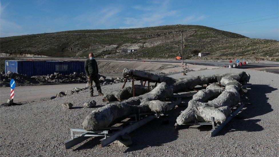 20 milyon yıllık ağaç fosili