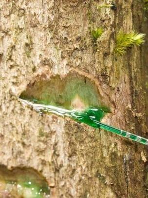 Sustancia azul saliendo de un árbol