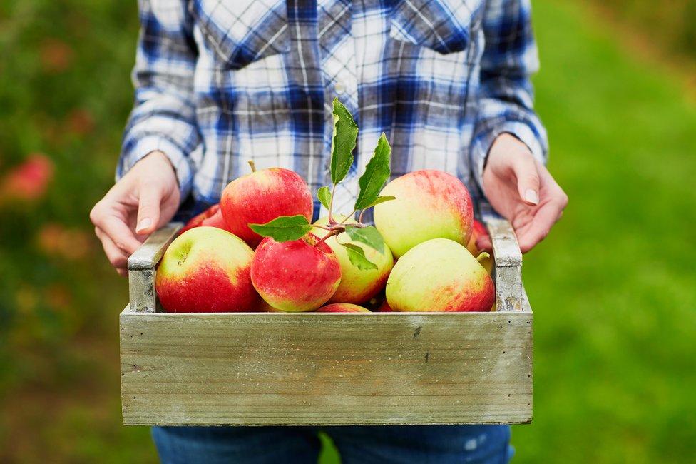 Una caja con manzanas.