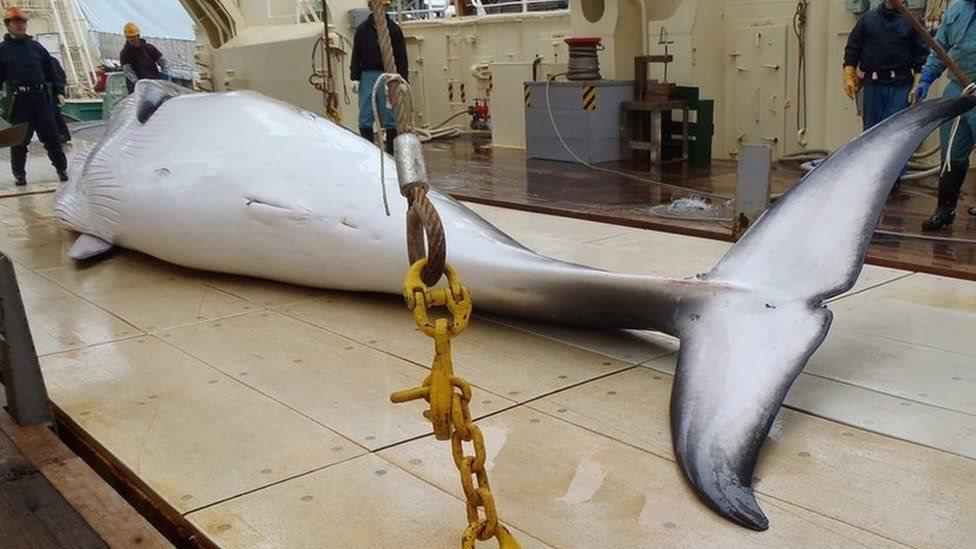 Мертвий кит