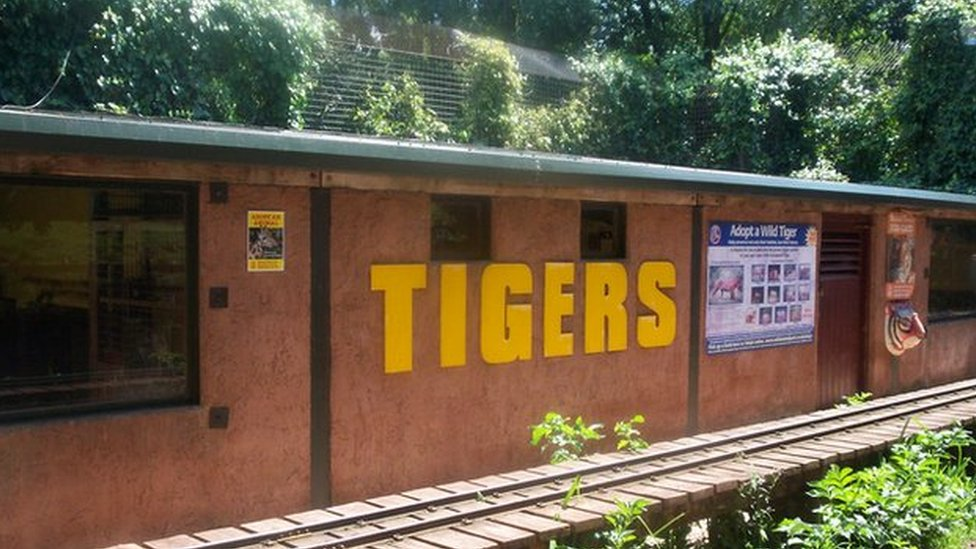 Tiger enclosure