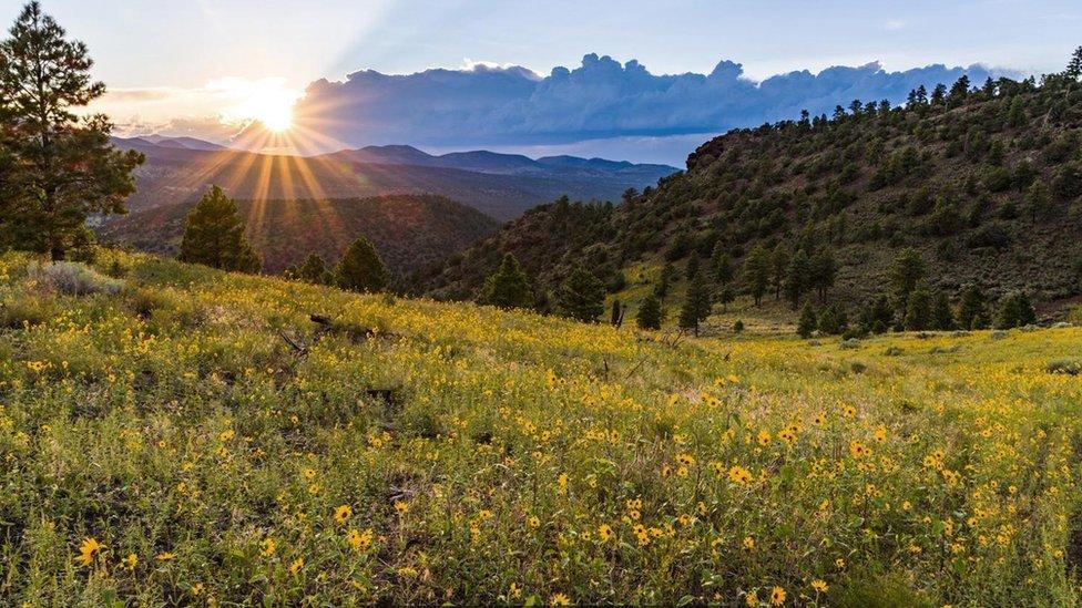Vista del Parque Nacional de Coconino, Arizona