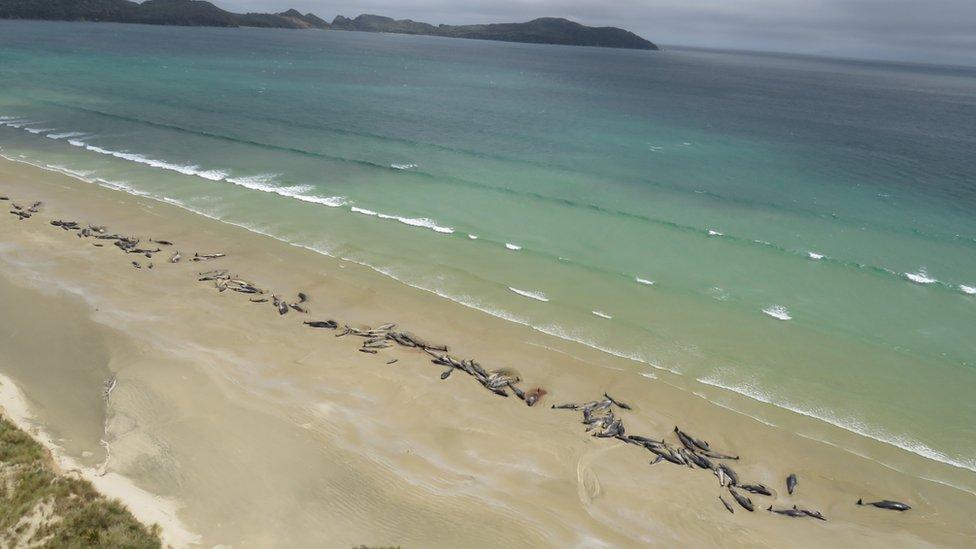 kıyıya vuran balinalar