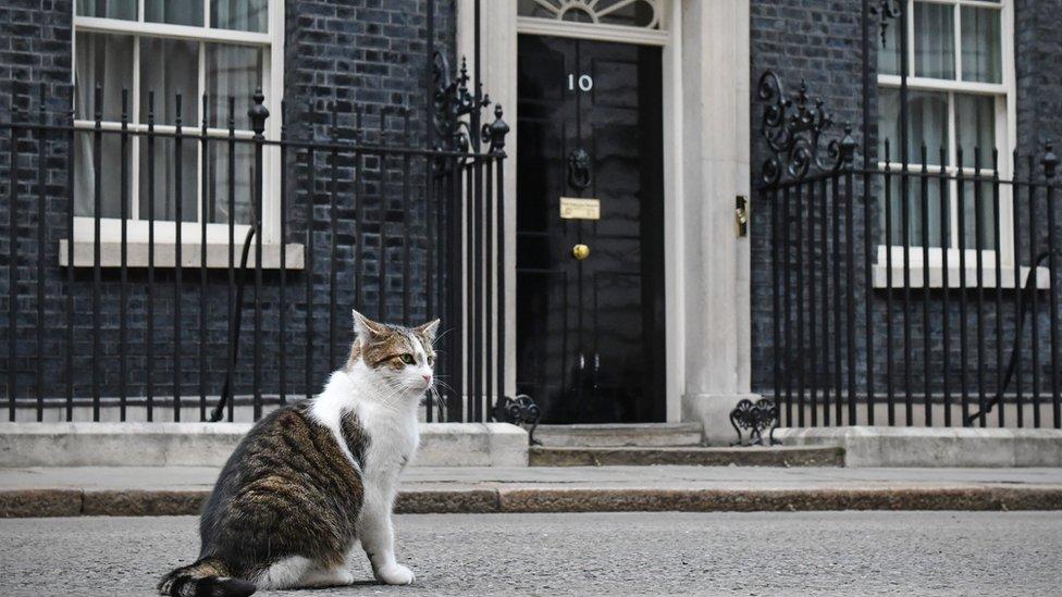 Mačak Leri ispred Dauning Strita 10